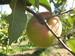 manzanas esperiega 9